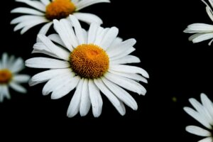 【ドライハーブ作りに役立つ】ハーブの開花時期まとめ