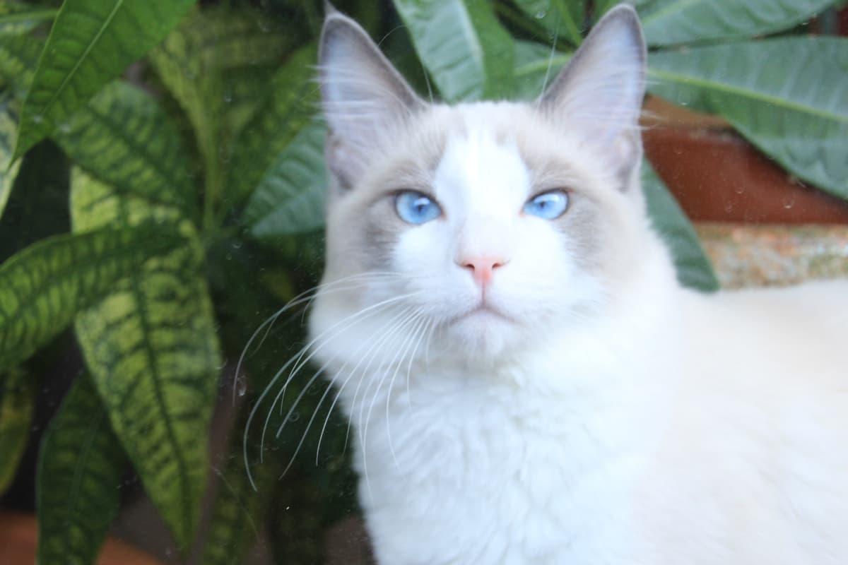 猫に安全な植物・危険な植物まとめ